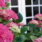 The Wonderful Window Box: Design Basics for this Garden Treasure