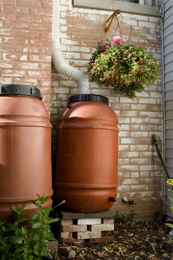 Rain Barrels: Collect Water, Conserve Energy, Reduce Waste