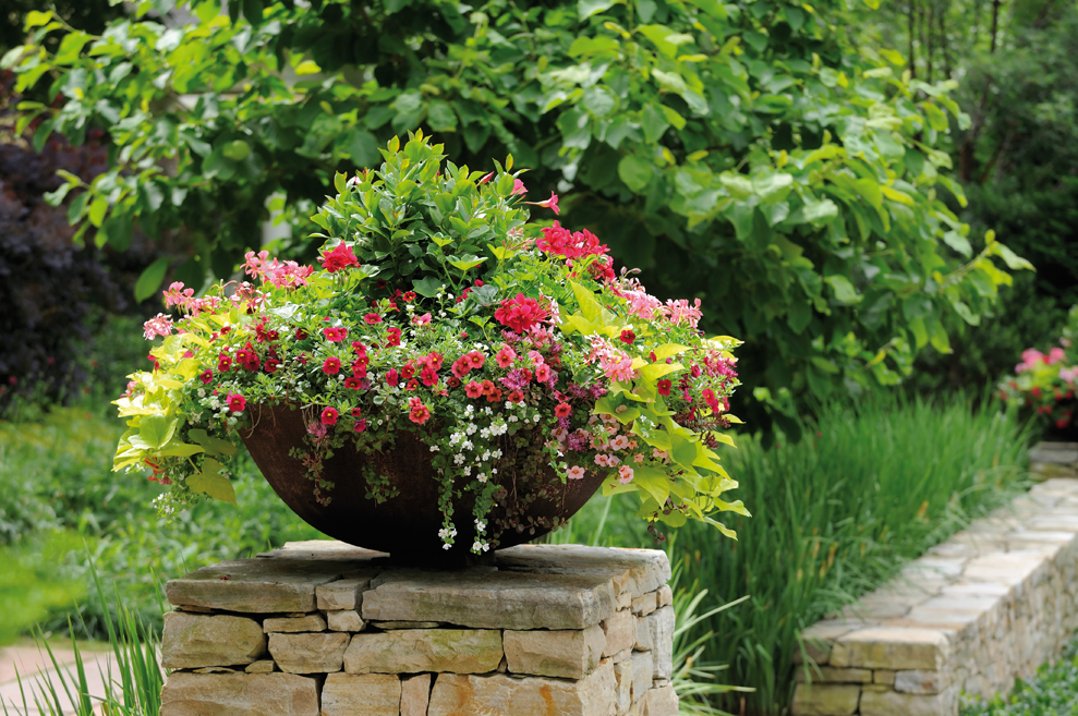 Perfect Planters: Which Container Works for You?