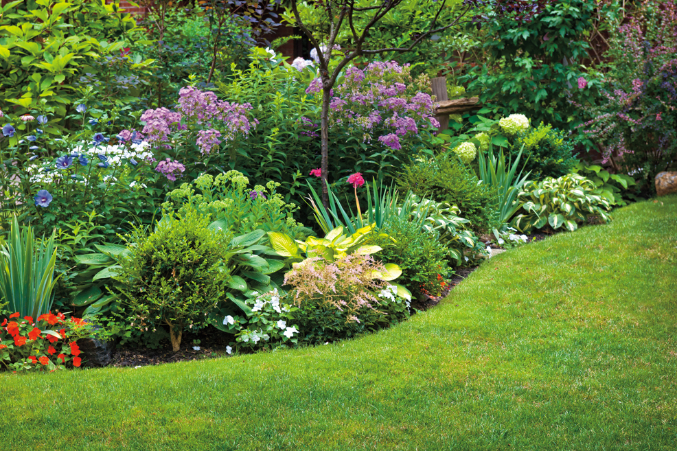 Perennial Maintenance: Divide and Conquer for Better Blooms