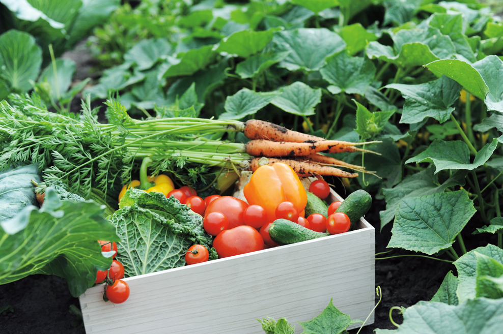 Grown From Seed: Don't Settle For Garden-Variety Plants