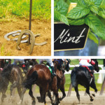 Off to the Races: Hosting a Horserace Party