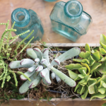 Succulent Gardens | Add Color and Warmth to Indoor Spaces