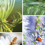 Beneficial Bugs | Insects and Host Plants Work Together to Protect Gardens