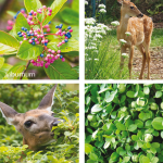 Oh Deer! | Protect Your Garden From This Prolific Pest