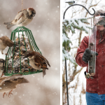 Christmas Gifts to Attract Winter Winged Visitors