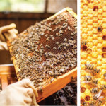 Beekeeping | A Sweet Investment