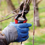 Spring Pruning | The Art of the Cut