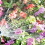 Inspiration for Irrigation | Keeping Your Garden Green