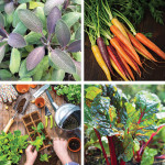 Digging In | A Kitchen Garden Primer