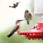 Hummingbird Hospitality | Welcoming Nature's Littlest Angels