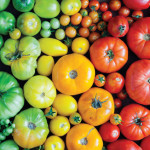 Garden Stars | Homegrown Tomatoes