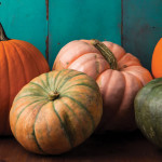 The Great Pumpkin | So Much More Than Just a Squash