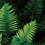 Jurassic Garden | Harness the Ancient Beauty of Ferns