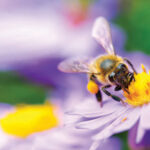 All Abuzz About Bee City | Groups Come Together to Help Protect Nature's Popular Pollinators