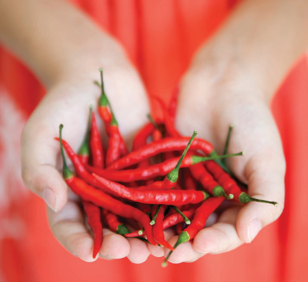 Pick a Pepper | Popular Peppers for Every Taste