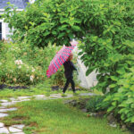 Water Woes | Solving Drainage Issues in Your Yard