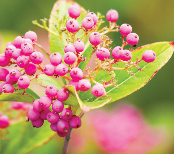 1, 2, 3 Times! | Multiseason Foliage and Flora in the Garden