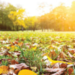 Fall Lawn Care | Getting Your Grass Ready for Winter